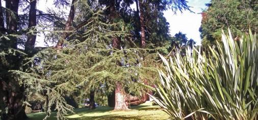 Visita el jardín del Museo Evaristo Valle con el biólogo Gonzalo Gil