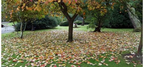 """D. 13 Nov, 12.30 h // Visita guiada """"Descubre… el otoño en el jardín del museo y La obra de paso -Encuentro-."""""""