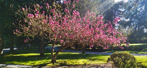 S. 23 marzo, 12.00 h // Visita guiada… Descubre la primavera en el jardín del Museo Evaristo Valle